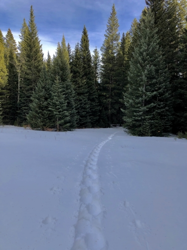 Wilderness snowshoeing at West Magnolia